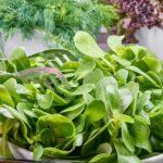 Cosa succede a chi mangia spinaci crudi? Ecco la risposta