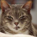 I graffi dei gatti sono pericolosi? Ecco cosa può accadere