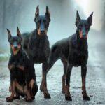 Cani pericolosi: ecco la classifica