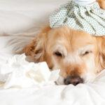 I cani si possono ubriacare? La verità è sconvolgente