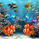 Effetti benefici dei pesci: guardarli aiuta contro lo stress
