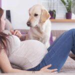 Il cane capisce se sono incinta? Il più delle volte sì