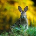 Perchè il coniglio ha un cattivo odore?