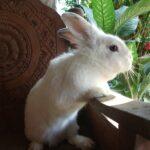 Come evitare il colpo di sole nel coniglio domestico: alcuni consigli