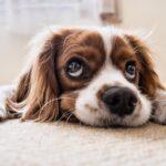 Dare le medicine al cane: ecco come fare e quali trucchi usare