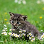 Quali gatti sono più adatti ai bambini? Ecco le razze