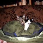 Come far entrare un secondo gatto in casa: tutti i suggerimenti